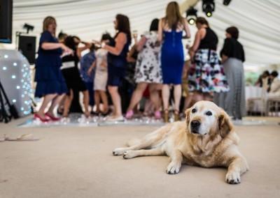 South-Wales-wedding-photographers-Cardiff-169