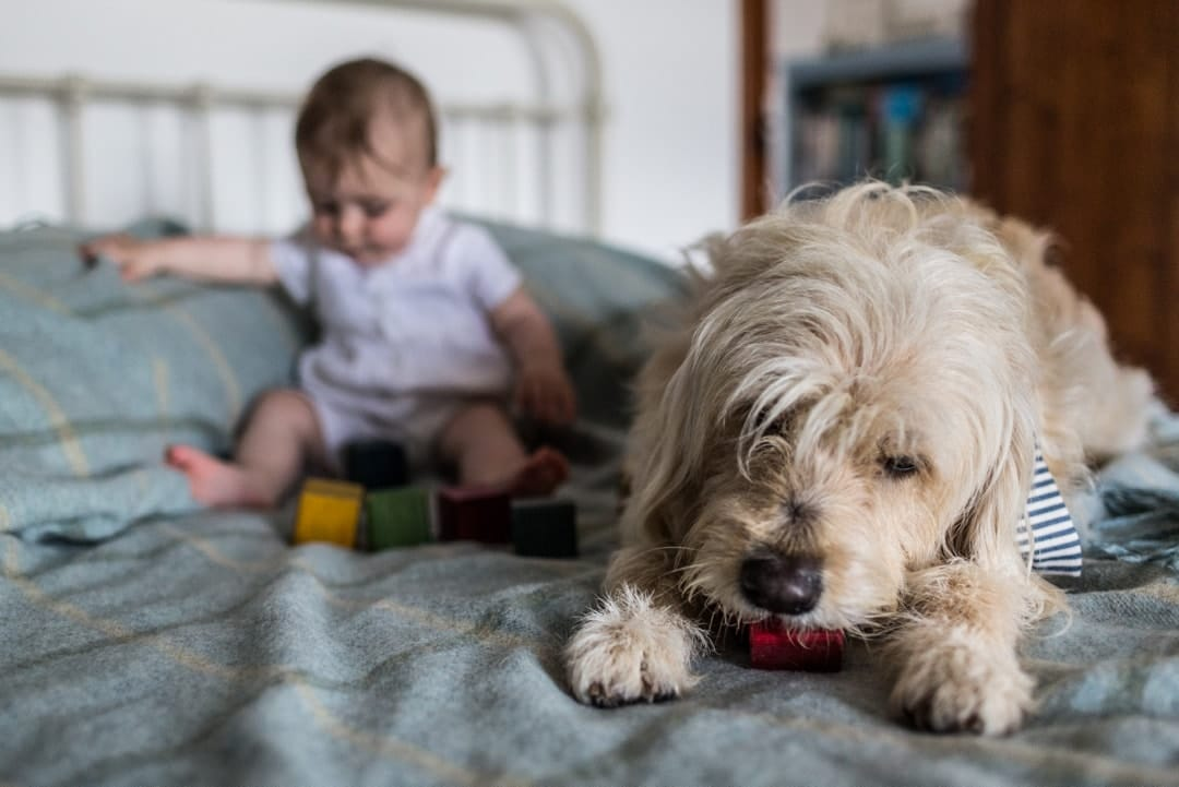 baby an dog with playing bricks