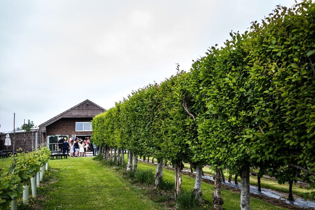 Llanerch-Vineyard-Wedding-040616027