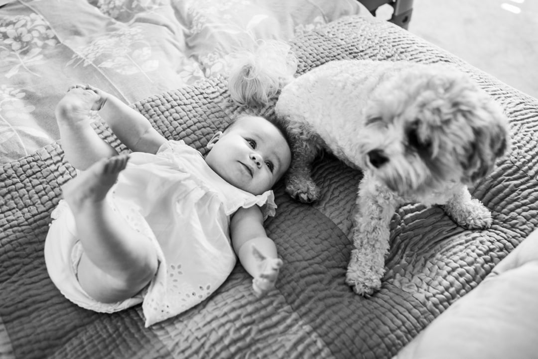 baby and dog portrait in south wales