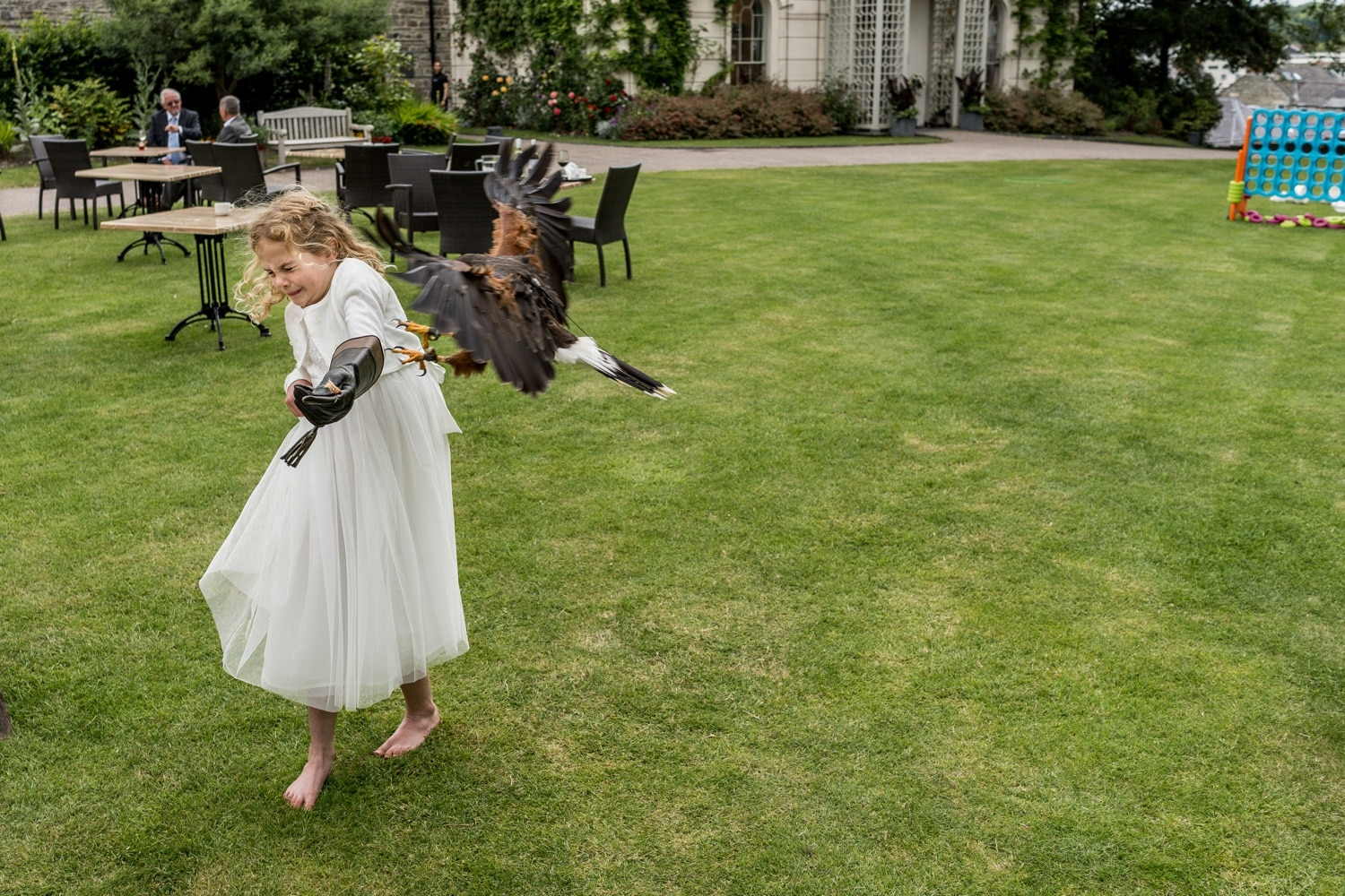 Falconry display at a wedding